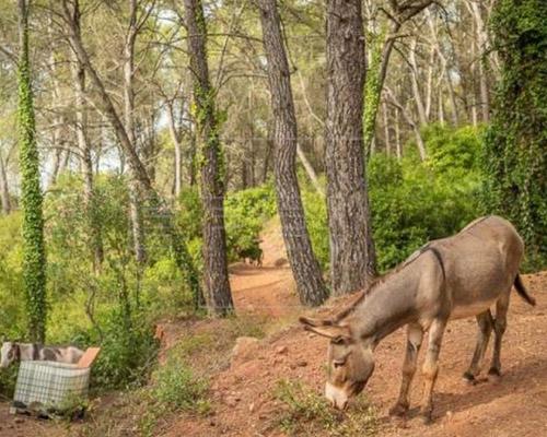 Dimite el director de Medio Natural del Gobierno de Valencia por la muerte de 10 burros en un proyecto antincendios