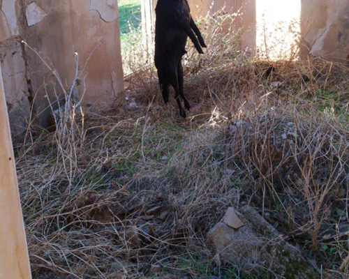 Investigan el ahorcamiento de un perro en Jaén