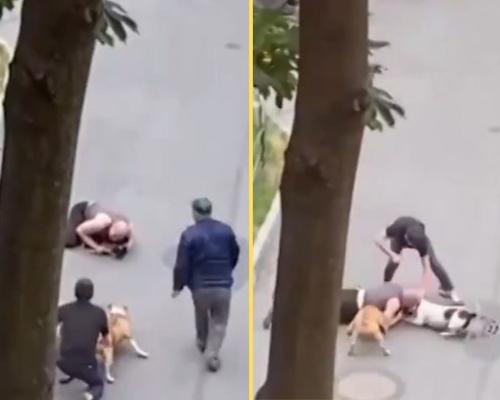 Un hombre arriesga su vida por salvar a su perro del ataque de otros dos canes