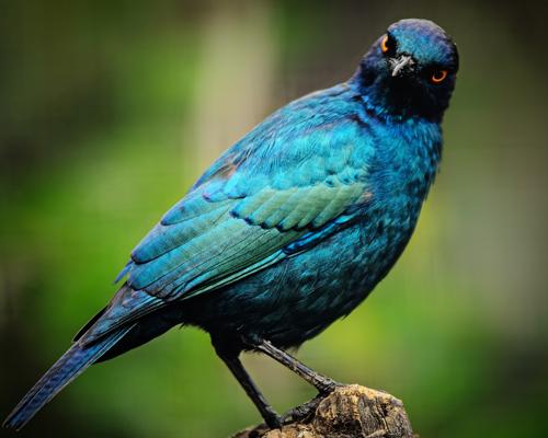 Desaparecen 3000 millones de pájaros en Norteamérica