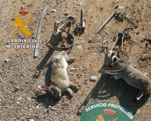 Multa de hasta 100.000 euros por colocar tres cepos de caza