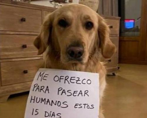 Denuncian a un hombre por alquilar sus perros en Galicia