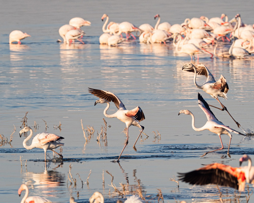 "Alertan de la ""muerte"" del lago Nakuru en Kenia"