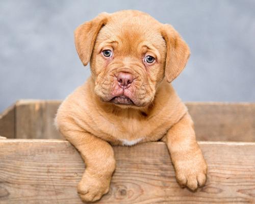 La mayoría de los perros abandonados en 2020 no tenían microchip