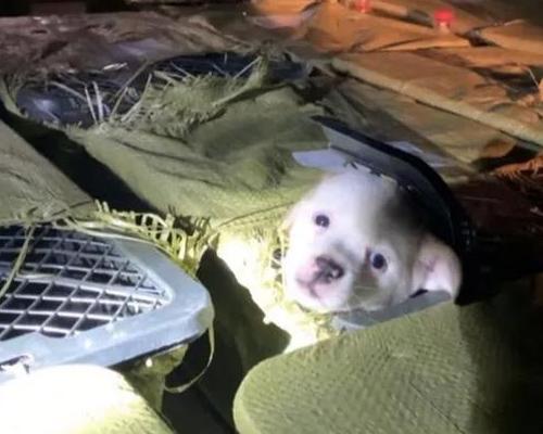 La moda de las cajas misteriosas mata a miles de animales en China