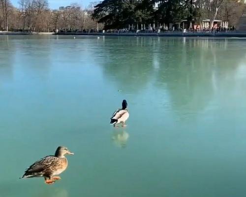 Las heladas congelan el lago de El Retiro de Madrid