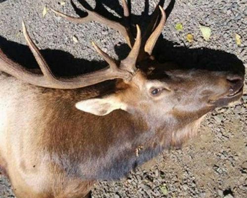 Un cazador fallece atacado por un ciervo al que creyó muerto