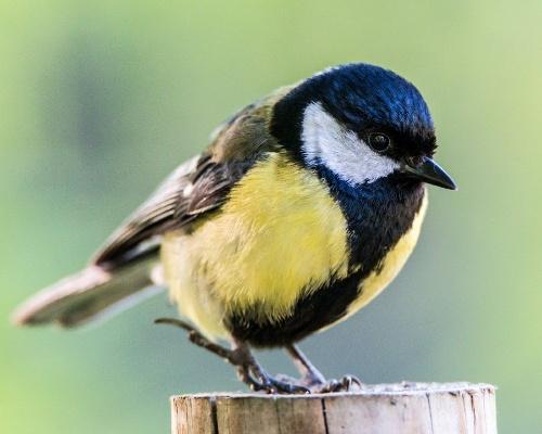 Una enfermedad contagiosa mata a miles de aves