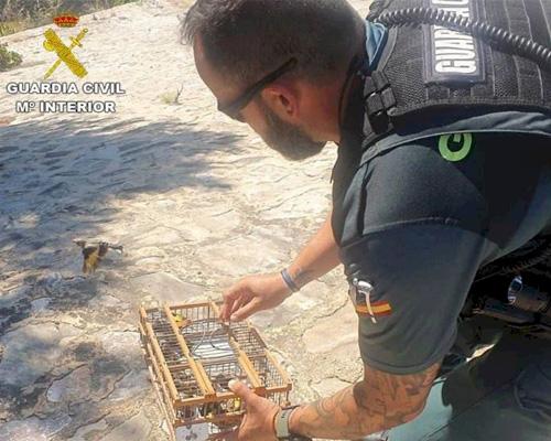 Sorprenden en Torrevieja a dos hombres con 28 jilgueros