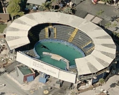Liberad a Lolita, la orca encerrada durante 50 años
