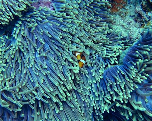 Un coral resiste a los efectos del cambio climático
