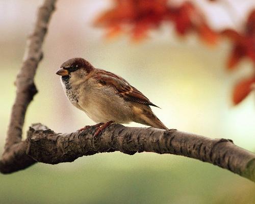 Buscan a quien amputa patas a pájaros con bridas en Granada