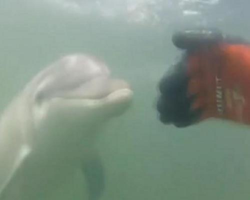 El delfín Manoliño, peligrosamente acosado por los bañistas