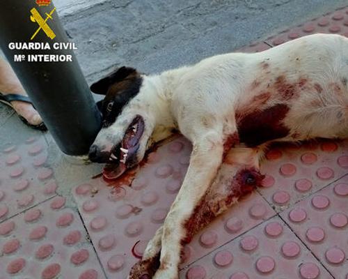 Detenido un hombre por arrastrar a un perro en un ciclomotor