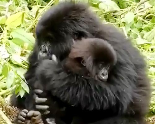 Cinco animales en peligro de extinción por la acción humana