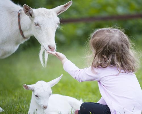 Los bebés que viven cerca de animales son más fuertes