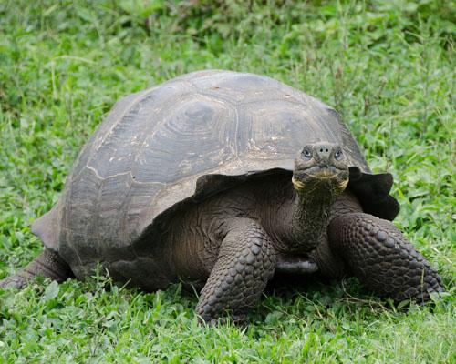 El paraíso de las Galápagos, en peligro debido al plástico
