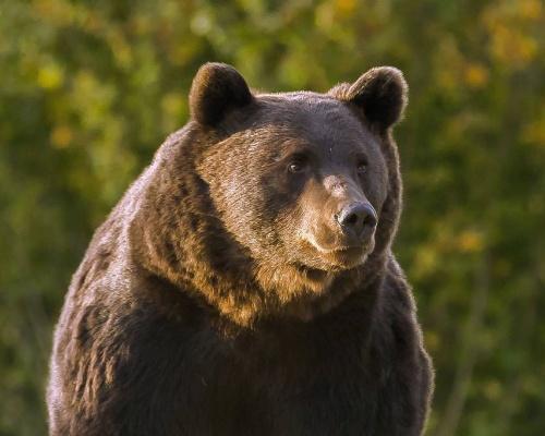 Acusan a un príncipe de Liechtenstein de matar al oso Arthur