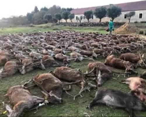 Portugal investiga a 16 cazadores españoles por matar a 540 animales