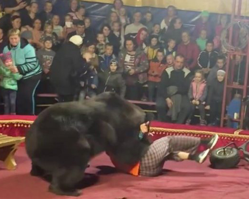 Un oso ataca a su domador en plena función