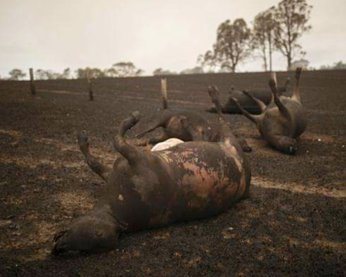 1.000 millones de animales mueren en Australia