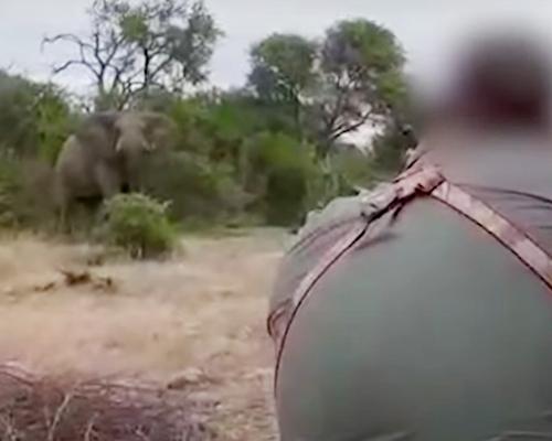 PETA denuncia que Ramaphosa se lucra de la caza de trofeos