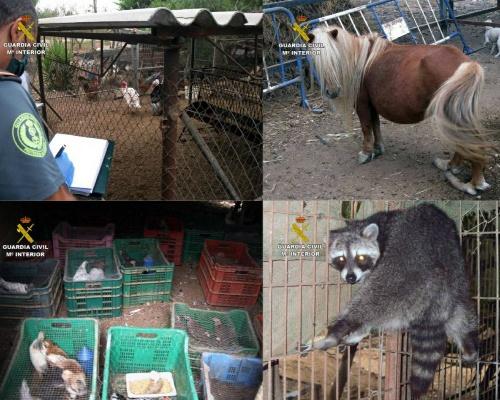 Desmantelan un zoo ilegal con 572 animales en Lorca