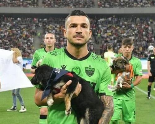 La Federación Rumana de Fútbol presentará perros en adopción