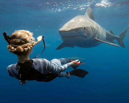 ¿Sabías que los tiburones perciben campos eléctricos?