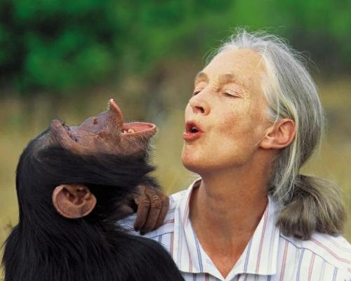 Era falso: Jane Goodall no amadrinará el Congreso de Conservación