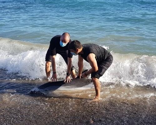 ¿Cómo debemos actuar si encontramos un delfín varado?