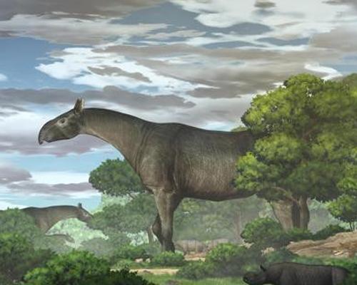 Descubren en China los restos de un rinoceronte gigante