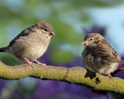 El 37% de las aves de España están amenazadas