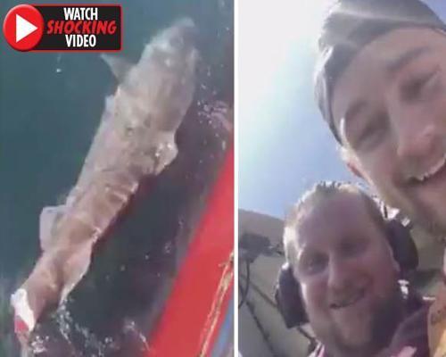 Cortan la cola a un tiburón y comparten el vídeo