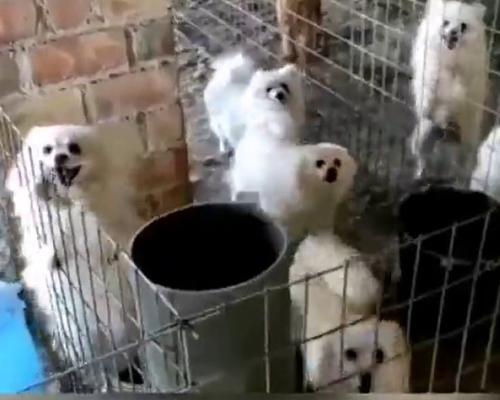 Desmantelan un criadero ilegal de perros en Granada
