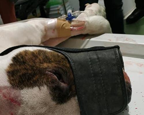 Arrojan al río a un perro herido en un pueblo de Córdoba