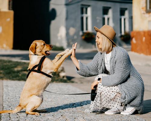 ¿Cómo iniciarse como cuidador de mascotas a tiempo completo?