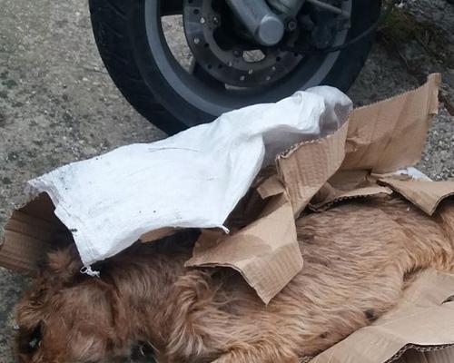 Buscan a la persona que abandonó a una perra moribunda en Xátiva