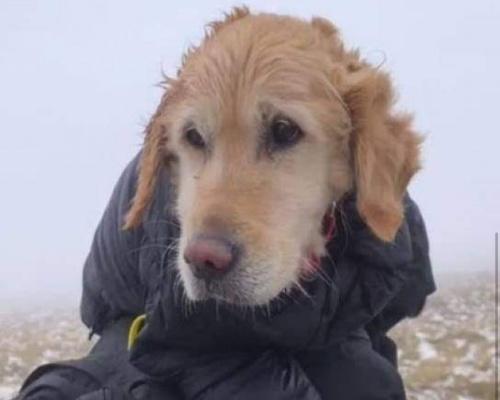 Denunciados por saltarse las restricciones para salvar a un perro
