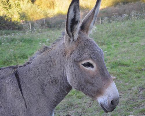 ¿Quién ha matado más de 40 burros en California?