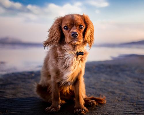 Almería estrena la playa para perros más grande de la provincia