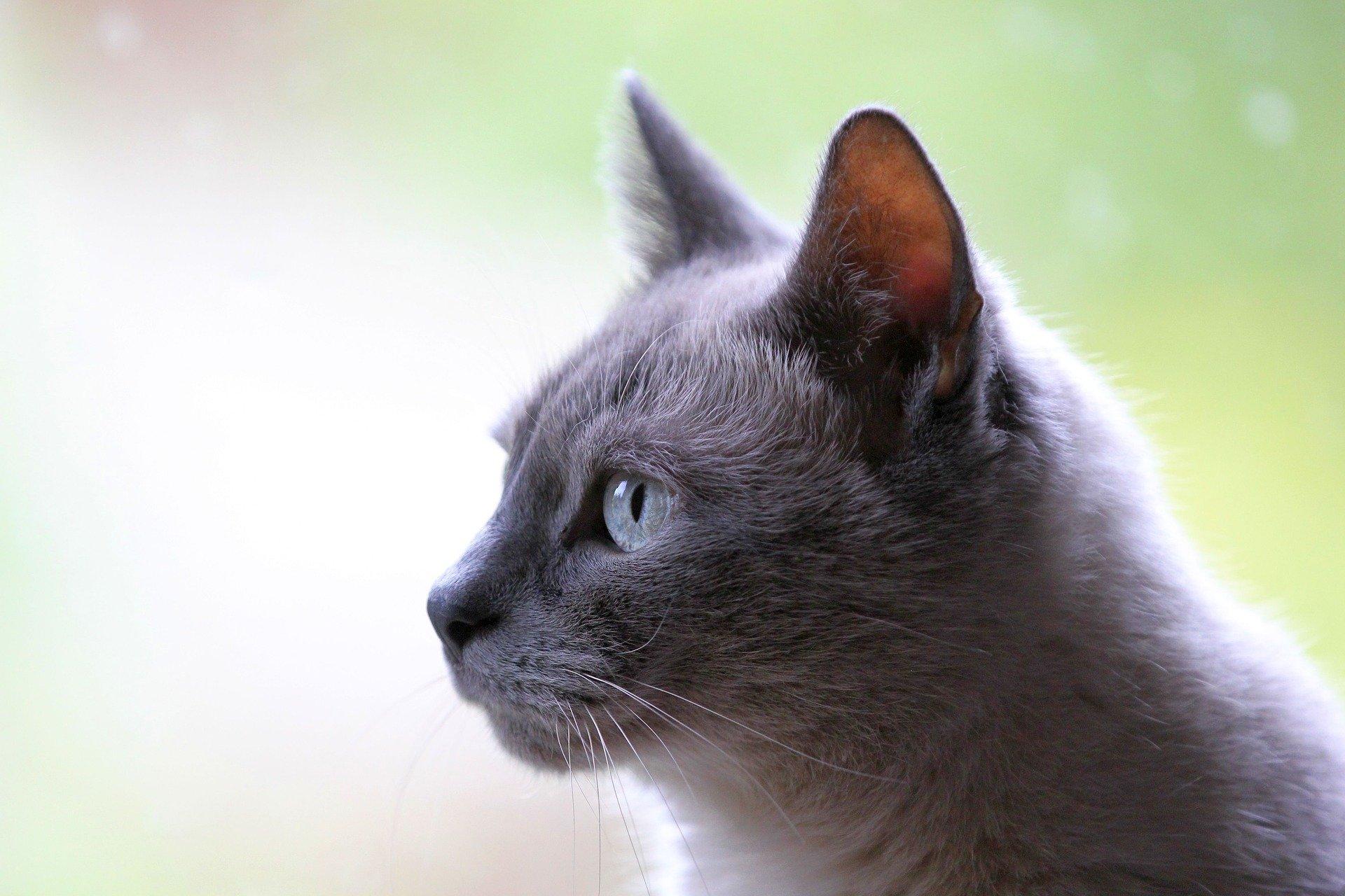 La mayoría de los gatos recogidos por las protectoras en 2020 estaban enfermos
