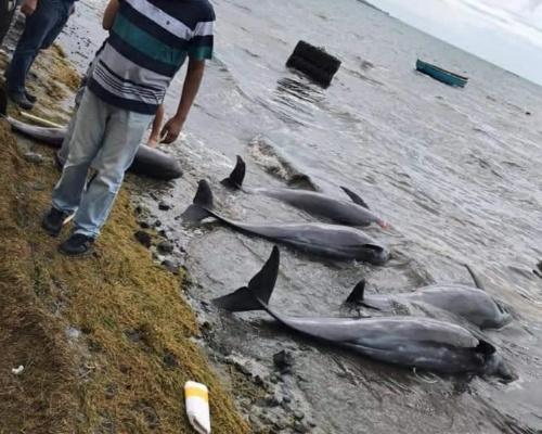Mauricio, cementerio de cetáceos desde el vertido