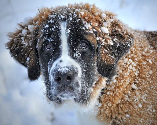¿Cómo podemos ayudar a los animales en la ola de frío?