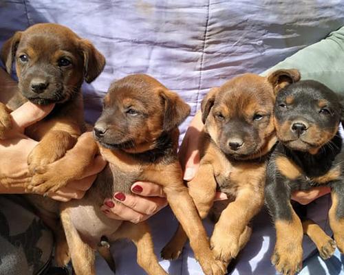 Estos cachorros abandonados buscan hogar