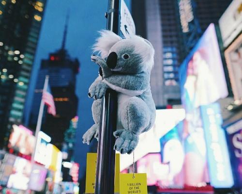 Los koalas solidarios conquistan Nueva York