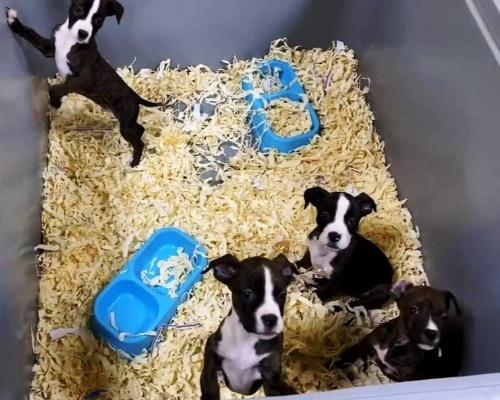 Desarticulada en Toledo una red que vendía perros enfermos