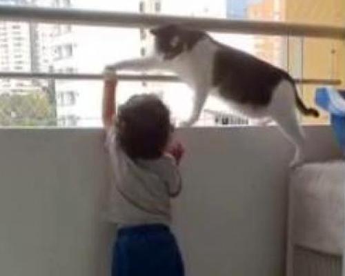 Un gato protege a un bebé de caer por la terraza