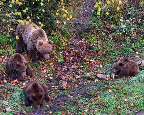 Cinco oseznos nacen en el parque conquense de El Hosquillo