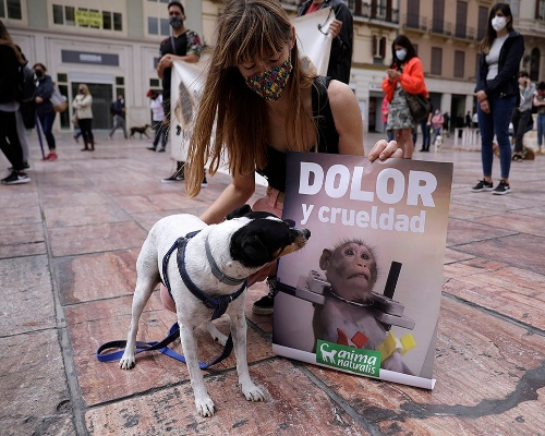Centenares de personas se manifiestan contra la experimentación animal